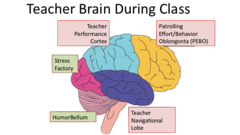Teacher-brain_crop